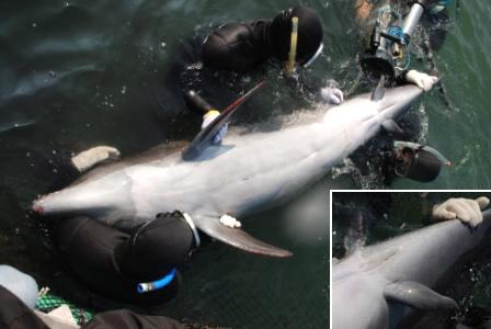 http://news.nationalgeographic.com/news/2006/11/061106-dolphin-legs.html