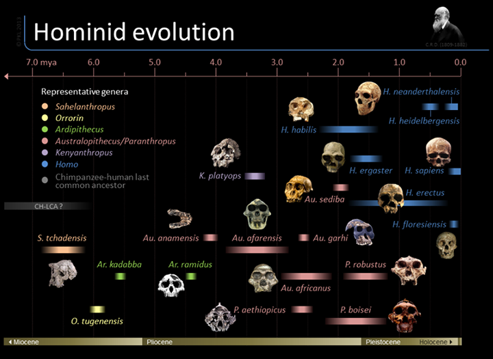 the correlation between the human evolution and fossil records Sl/hl2 biology ferguson uncertainties with respect to human evolution because the hominid fossil record the correlation between the change in diet and.