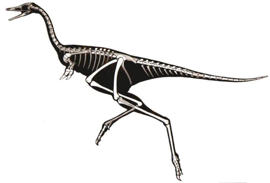 'http://blogs.smithsonianmag.com/dinosaur/2011/01/linhenykus-a-weird-one-fingered-dinosaur/' from the web at 'http://www.evolutionevidence.org/wp-content/uploads/2013/08/Linhenykus.jpg'