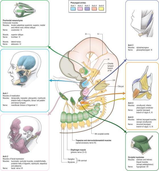 'bbmapasset1354154383941' from the web at 'http://www.evolutionevidence.org/wp-content/uploads/2013/08/bbmapasset1354154383941.jpg'