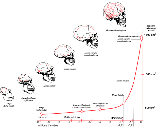 http://distraffscience.blogspot.com/2012/03/overview-of-human-evolution.html