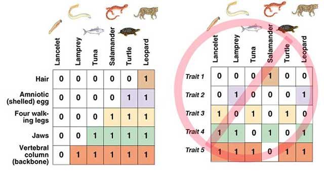 http://www.bio.georgiasouthern.edu/bio-home/harvey/lect/lectures.html?flnm=evel&ttl=Evolution&ccode=el&mda=scrn