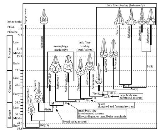 http://scienceblogs.com/loom/2006/08/15/the-origin-of-the-ridiculous/