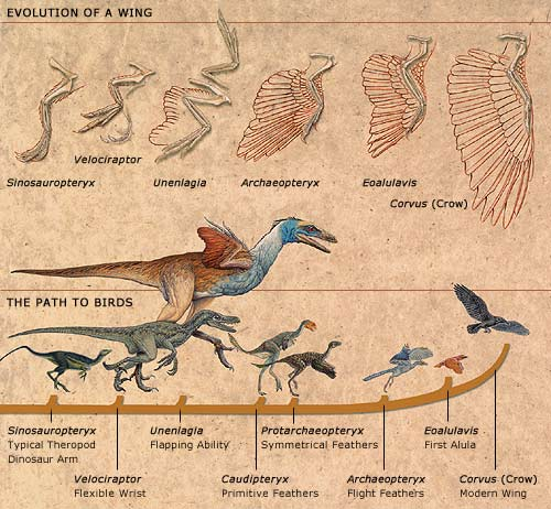 http://www.pbs.org/wgbh/evolution/library/03/4/image_pop/l_034_01.html